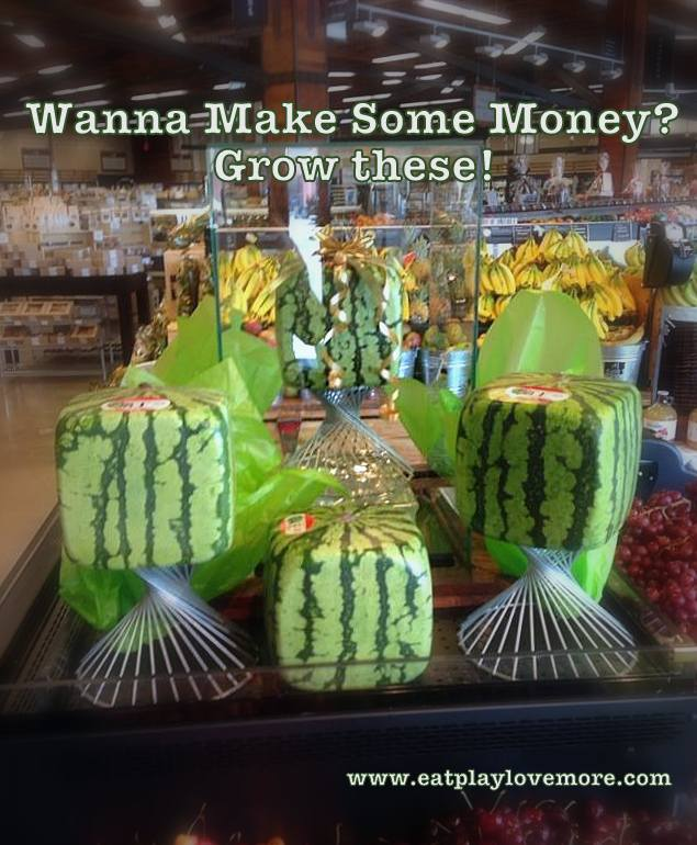 Wanna make some money grow square watermelons eat - Square watermelons how and why ...