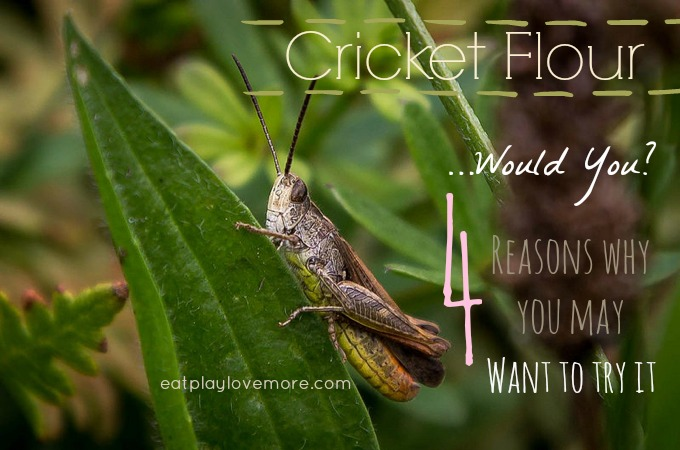Cricket Flour - 4 Reasons why you may wanna try it